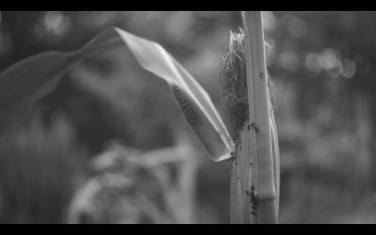 PREISTORICO INNUMANO (BAS) 1 channel video B&W sound 09:58:00 2014
